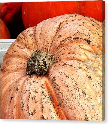 Peachy Pumpkin Canvas Print by Art Block Collections