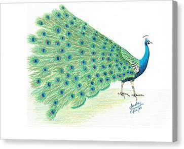 Peacock Canvas Print by Anshuman Trivedi