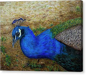 Peacock Blue Canvas Print by Liza Gonen