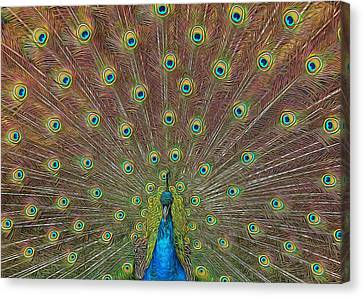 Canvas Print featuring the photograph Peacock Fanfare by Diane Alexander