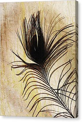Peacock Feather Silhouette Canvas Print by Sarah Loft