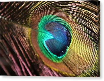 Canvas Print featuring the photograph Peacock Feather by Terri Thompson