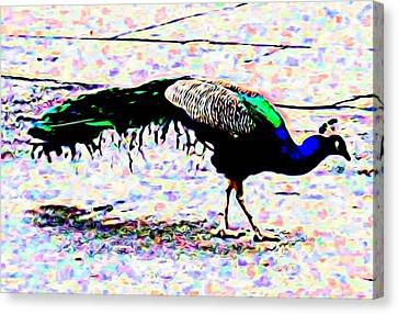Peacock In Abstract Canvas Print