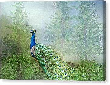 Canvas Print featuring the photograph Peacock In The Forest by Bonnie Barry