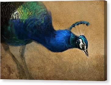 Peacock Light Canvas Print by Aaron Blaise