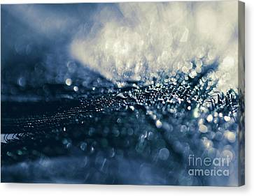 Canvas Print featuring the photograph Peacock Macro Feather And Waterdrops by Sharon Mau