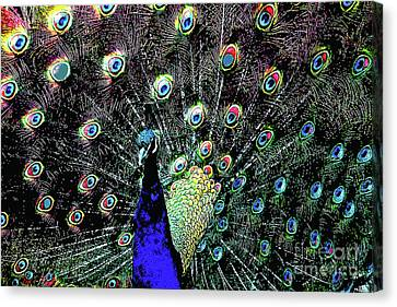 Wings Domain Canvas Print - Peacock . Photoart . R1933 by Wingsdomain Art and Photography