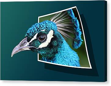 Out Of Frame Canvas Print - Peacock by Shane Bechler