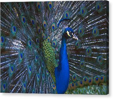 Canvas Print featuring the photograph Peacock Splendor by Marie Hicks