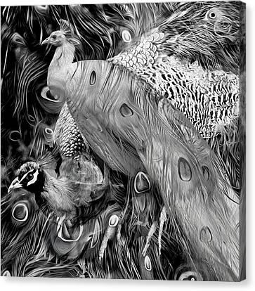 Peacock - Peacocking Canvas Print
