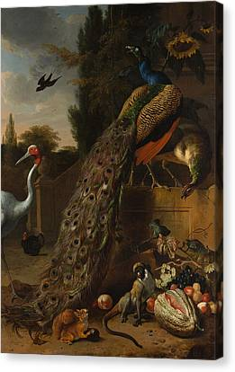 Canvas Print featuring the painting Peacocks by Melchior d'Hondecoeter