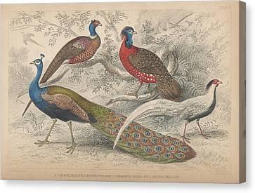 Peacocks Canvas Print by Rob Dreyer