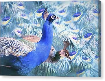 Peafowl Canvas Print by Barbara Hymer