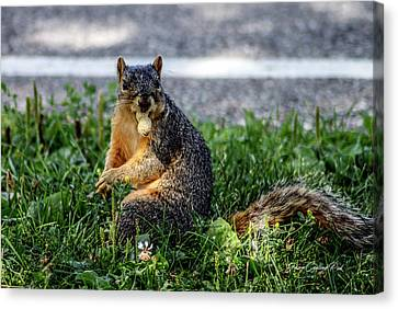 Canvas Print featuring the photograph Peanut by Joann Copeland-Paul