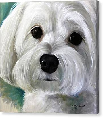 White Maltese Canvas Print - Peanut by Mary Sparrow