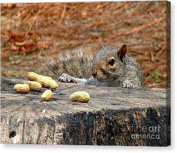 Canvas Print featuring the photograph Peanut Surprise by Sue Melvin