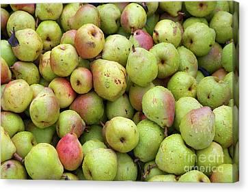 Pear Harvest Canvas Print
