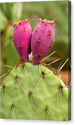 Canvas Print featuring the photograph Pear O Fruit V07 by Mark Myhaver