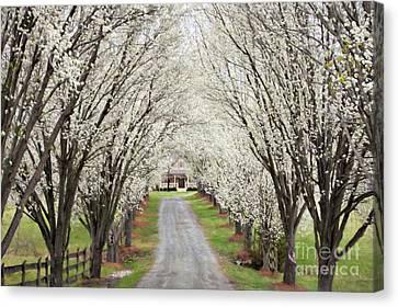 Split Rail Fence Canvas Print - Pear Tree Lane by Benanne Stiens
