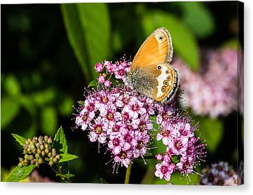 Pearly Heath Canvas Print
