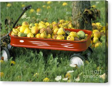 Pears In A Wagon Canvas Print by Gordon Wood