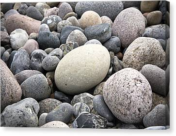 Muted Canvas Print - Pebbles by Frank Tschakert