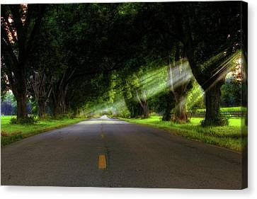 Canvas Print featuring the photograph Pecan Alley Rays - Arkansas - Landscape by Jason Politte
