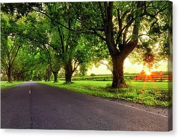 Canvas Print featuring the photograph Pecan Alley Sunrise - Scott Arkansas - Landscape by Jason Politte