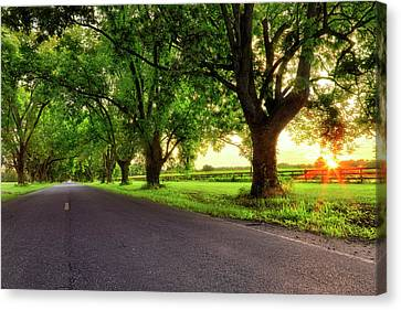 Canvas Print featuring the photograph Pecan Alley Sunrise - Scott Arkansas - Landscape by Jason Politte
