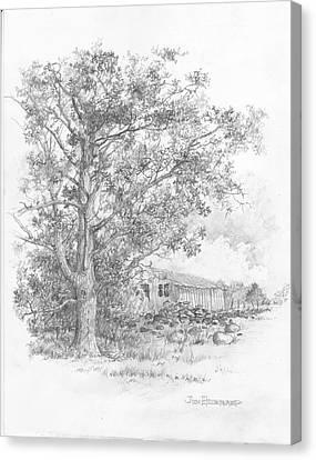 Pecan Tree Canvas Print