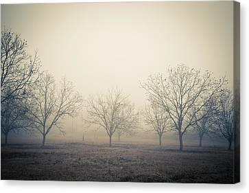 Pecan Trees Canvas Print by Gestalt Imagery