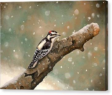 Pecking Through Rain Sleet And Snow Canvas Print by Carole Rickards