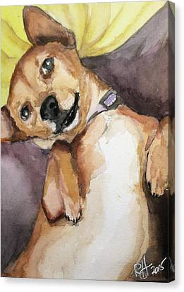 Pedro The Chi-weenie Canvas Print by Rachel Hames