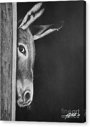 Peek-a-boo Burro Canvas Print