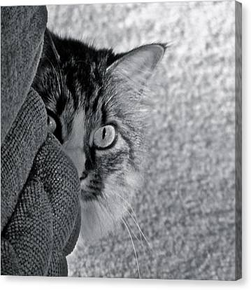 Peek A Boo Canvas Print by Eve Spring