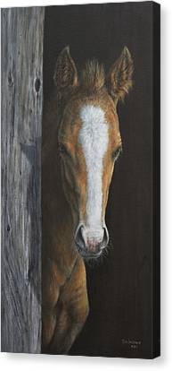 Canvas Print featuring the painting Peek A Boo by Kim Lockman