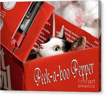 Cardboard Canvas Print - Peek-a-boo Pepper by Andee Design