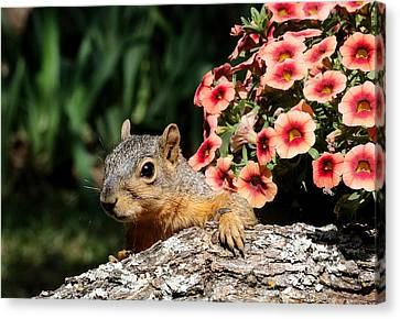 Peek-a-boo Squirrel Canvas Print