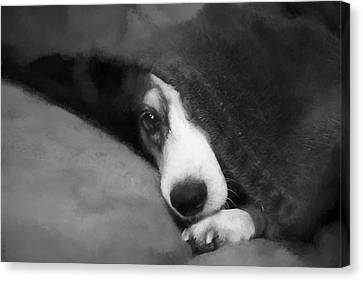 Peek-a-boo Canvas Print by Theresa Campbell