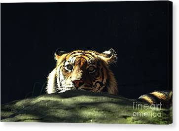 Canvas Print featuring the photograph Peek-a-boo Tiger by Angela DeFrias