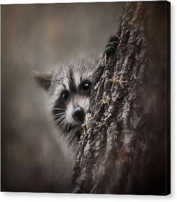 Peekaboo Raccoon Art Canvas Print by Jai Johnson