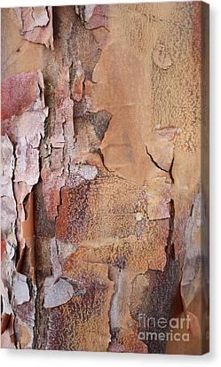Peeling Bark 2 Canvas Print by Carol Groenen