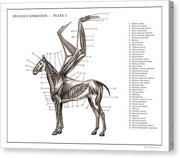 Pegasus Print 3. Canvas Print by EB Hudspeth