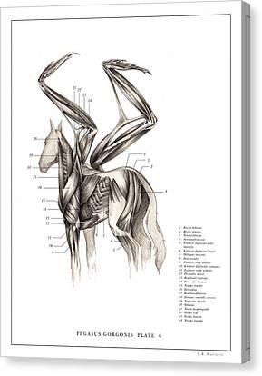 Pegasus Print 6,,,.. Canvas Print by EB Hudspeth