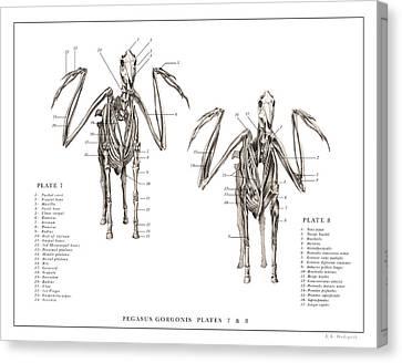 Pegasus Print 7, 8,,,.. Canvas Print by EB Hudspeth
