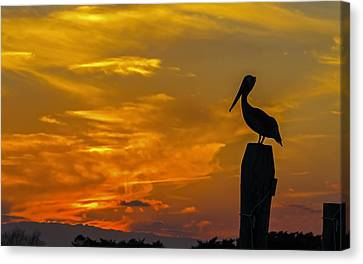 Pelican At Silver Lake Sunset Ocracoke Island Canvas Print by Greg Reed