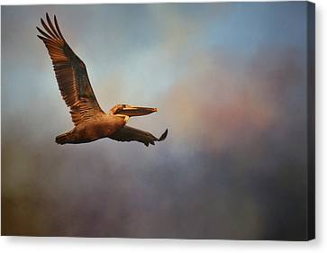 Pelican At Sunrise 2 Canvas Print by Jai Johnson