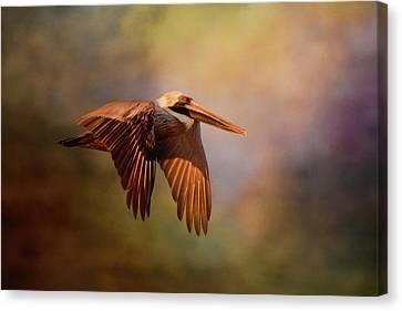 Pelican At Sunrise Canvas Print by Jai Johnson