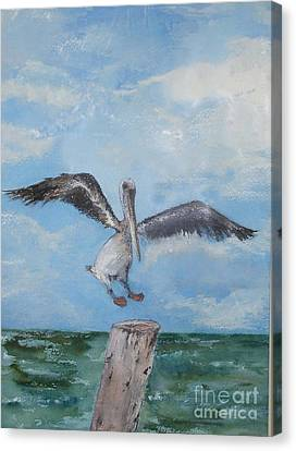 Canvas Print featuring the painting Pelican by Sibby S