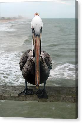 Pelican Beak Canvas Print by Kathleen Stephens